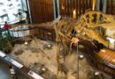 【台灣】認識台灣跟松鼠。土銀展示館+二二八公園
