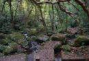 【香港】輕鬆走進香港秘境。昂平高原、梅子林