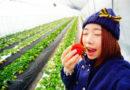 【京都】多汁又鮮甜的日本草莓。在涉谷農園無限量現摘現吃