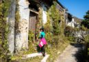 【香港】輕鬆古村遊。賞秋葉看古樹吃豆花。烏蛟騰至三椏村