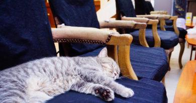 【曼谷】超療癒喵星人聚居地。Purr Cat Cafe Club