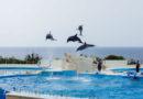 【沖繩】親親海洋世界。漫遊美麗海水族館