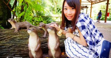 【新加坡】超近距離接觸。自然雨林環境的動物園