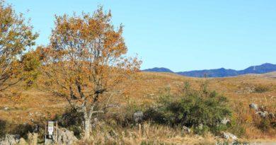 【山口】秋天來看怪石和蘆葦。秋吉台國定公園